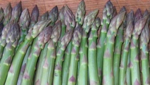 A Canino la sagra dell'asparago