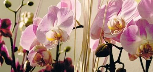 """A Monte Porzio Catone """"Orchidee dal mondo"""""""