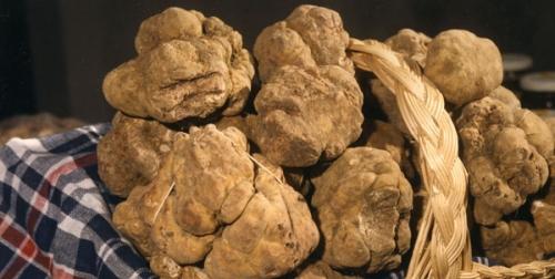 Toscana: a Cigoli al via la XVI Mostra Mercato del Tartufo Marzuolo
