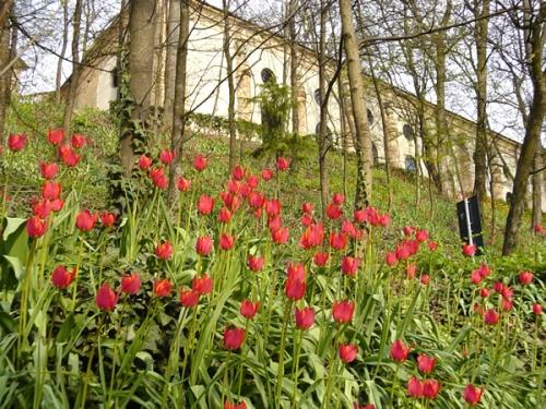 Piemonte. Tulipani nella Corte di Govone