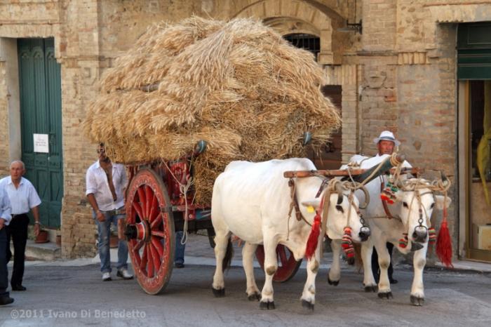Abruzzo. A Colonnella la Festa dei Manoppi