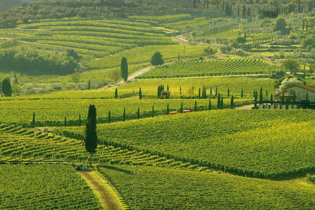 montalcino-vigne